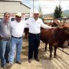Programa de mejoramiento genético beneficia a ganaderos de Tula
