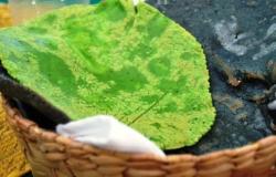 Nopal y tortillas aportan minerales esenciales para el cuerpo: UNAM