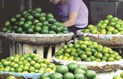 Tamaulipas, líder en producción de cítrico