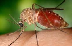 Alerta por virus del Nilo en los dos Laredos