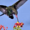Preparan Congreso para estudio y conservación de las aves en México