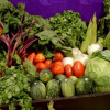 Contribuye Tamaulipas al aumento de exportación agroalimentaria