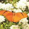 Invitan a caminata de mariposas