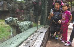 Profepa urge a garantizar seguridad de animales en zoológicos
