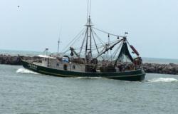 Ocupa Tamaulipas primer lugar en captura de camarón en Golfo de México