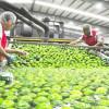 Crecen 11.2% exportaciones agroalimentarias a Canadá