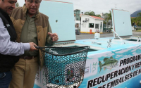 Enriquece Estado población de peces en presa La Boca