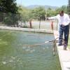 Impulsan producción acuícola en la FMVZ-UAT