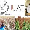 Elaboran del sorgo productos nutricionales, antimicrobianos y biocombustible