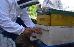 GobTam exhorta a los apicultores a que aprovechen el subsidio en areteo de colmenas.