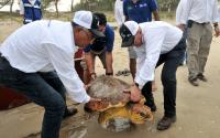 Tamaulipas contribuye a la protección y recuperación de tortugas marinas.