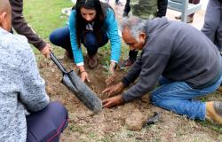 Gobierno del Estado reforesta 25 mil 900 árboles