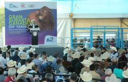 Se realiza subasta ganadera en beneficio de programas sociales de DIF Tamaulipas.