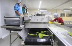 Es Tamaulipas cuarto lugar nacional en generación de empleo.